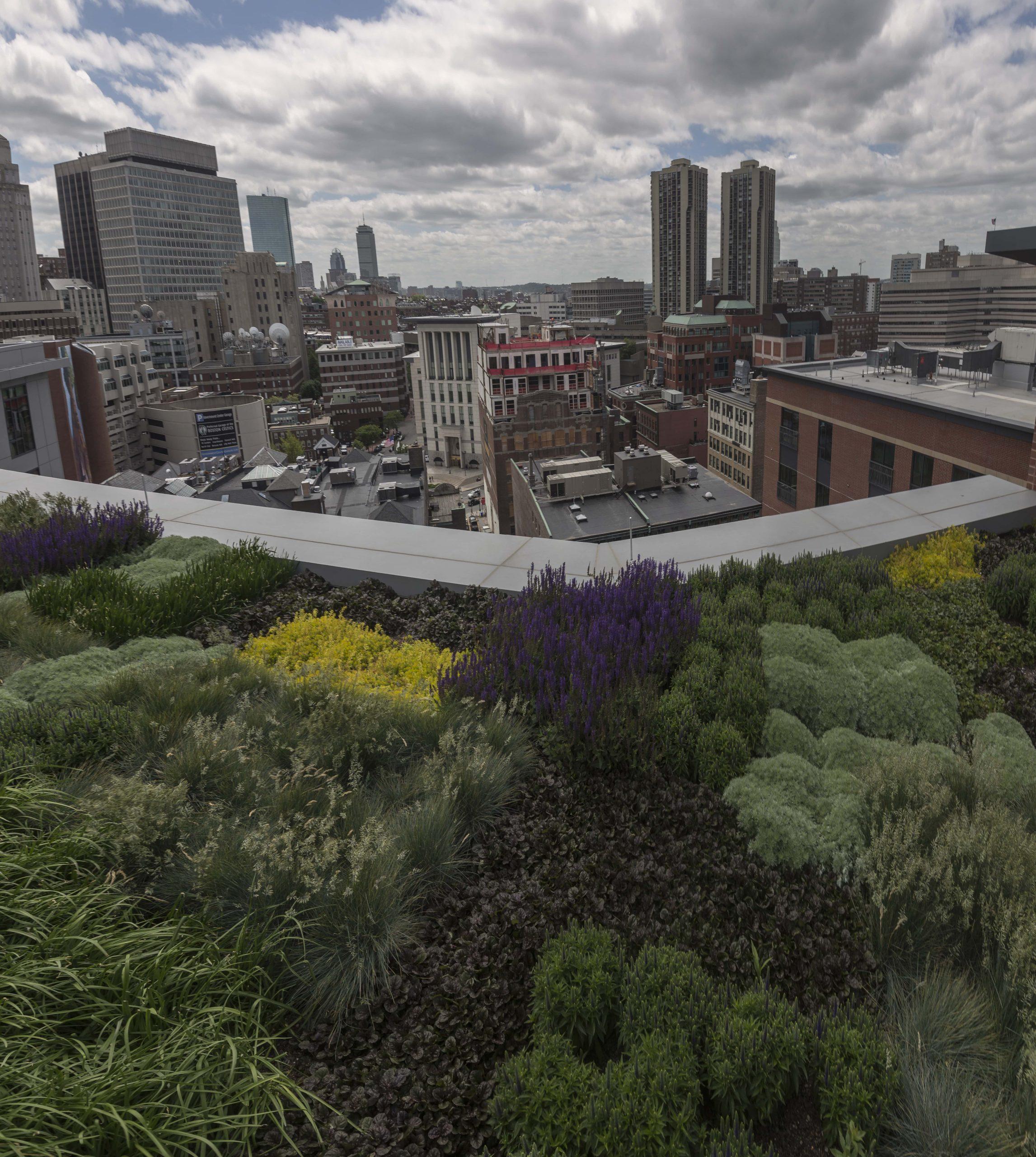 City overlook from a terrace garden on Canal Street.