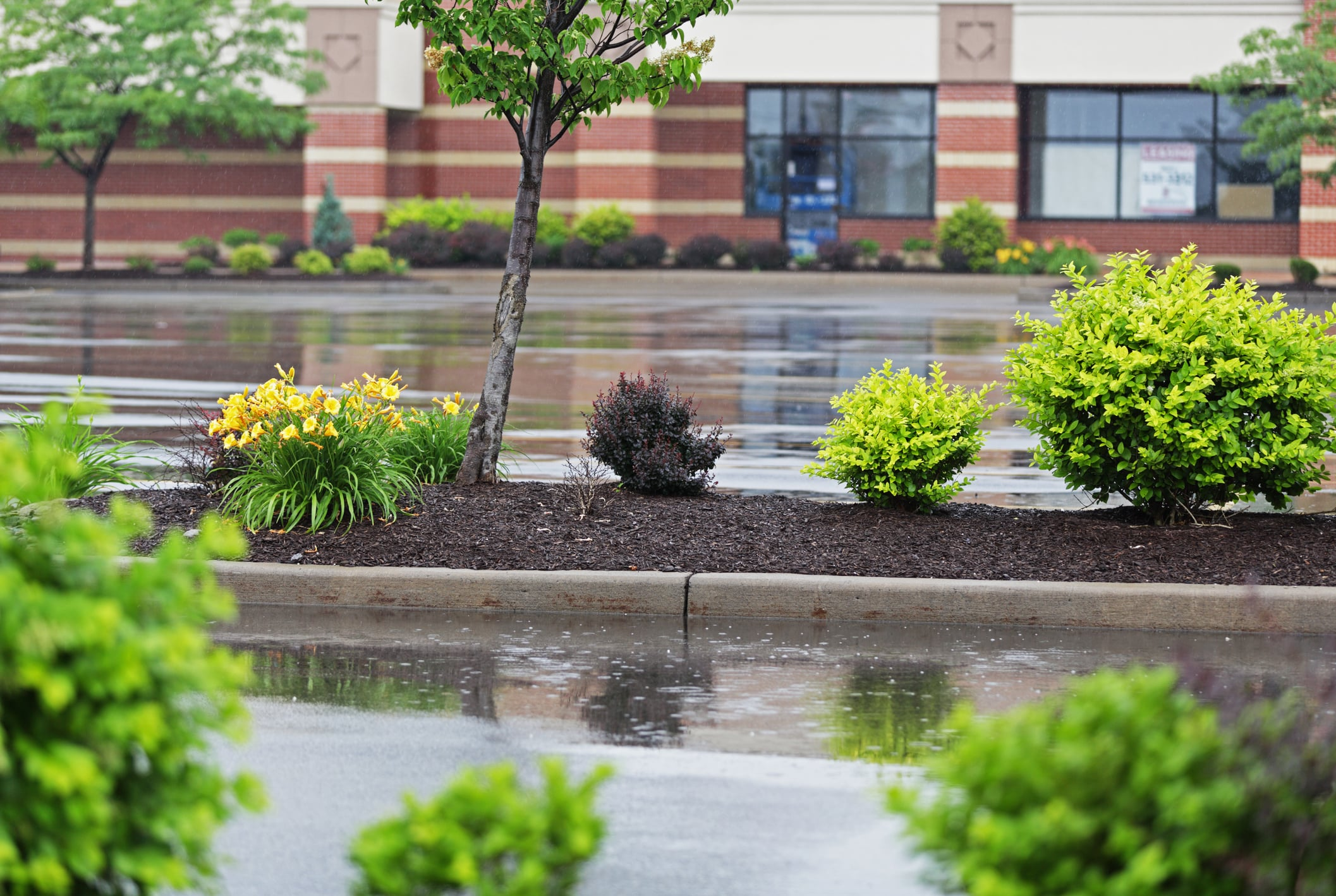 A retail parking lot divider complete with plants and a small tree.