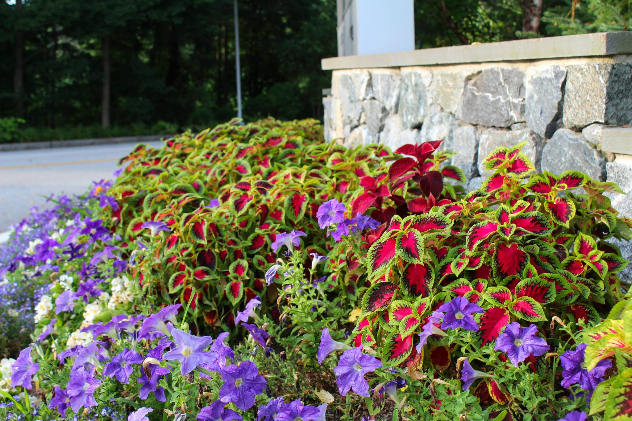 Example of the season color that Greenscape can bring to the table with their flower selection.