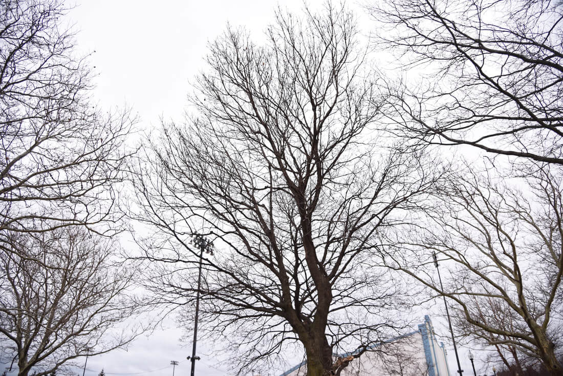 Use these tips for pruning your trees this winter.