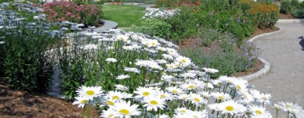 White Flowers Landscape Enhancement