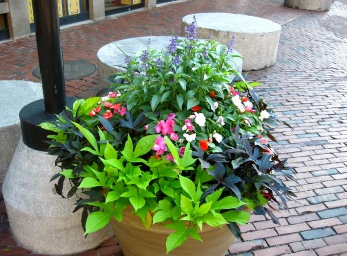 Flower Pot Display