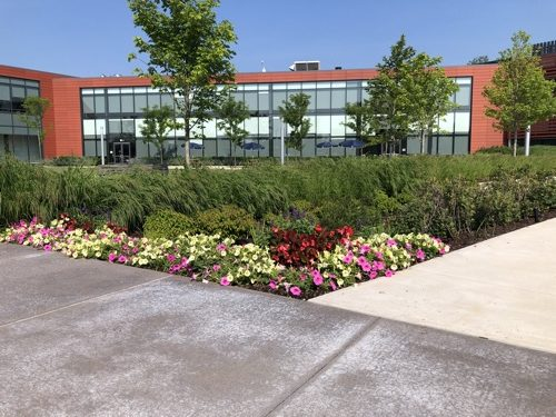 Landscape Enhancements and Blooming Flowers